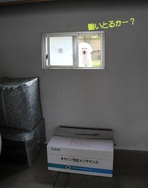 小窓と犬 (2)