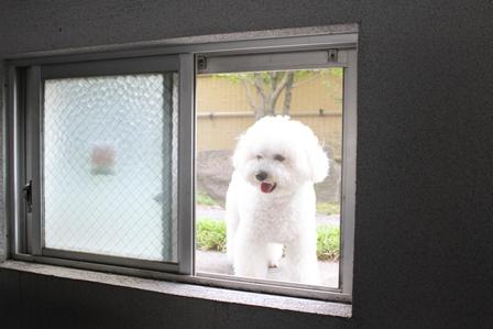 小窓と犬 (4)