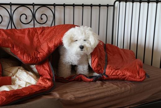 寝袋とP氏の関係 (5)