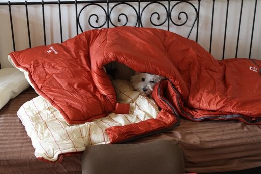 寝袋とP氏の関係 (4)