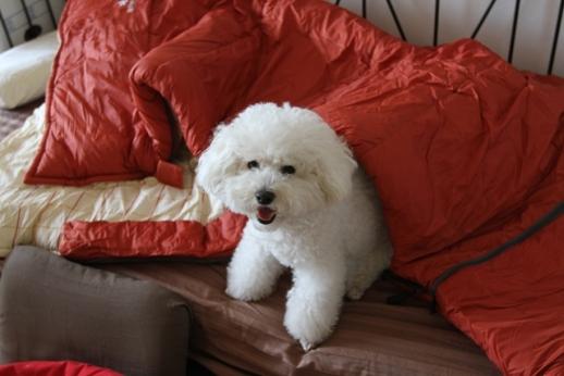 寝袋とP氏の関係 (6)