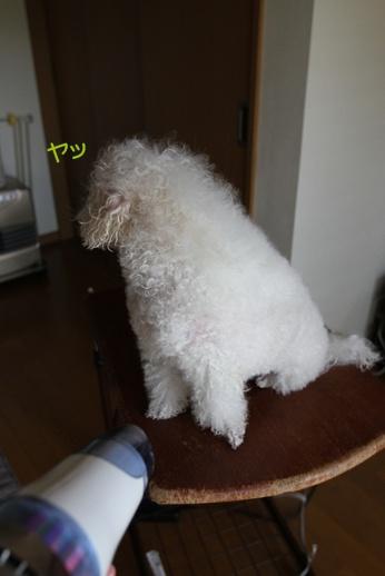 宅シャン (3)