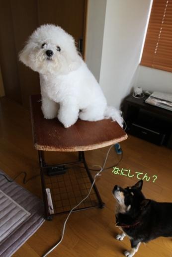 宅シャン (5)