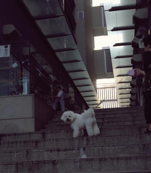 近所のお犬様事情 (2)