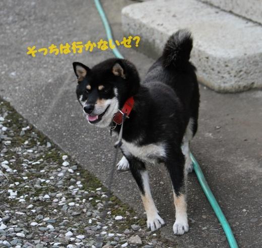 ぽんた親分観察日記 (2)