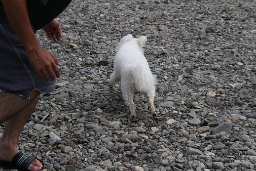 川原で犬連れBBQ~☆ 続き (7)