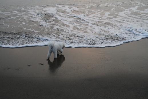 不完全燃焼の海 (4)