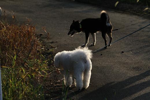 田舎散歩 (7)