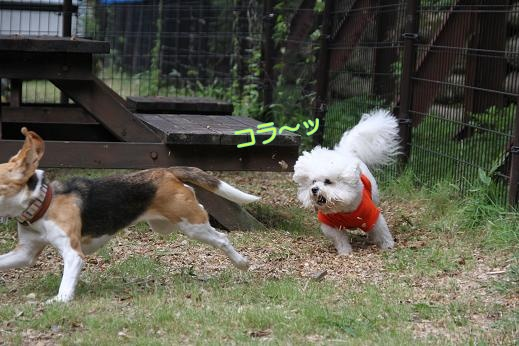 MOFRISE CAMP 2011 -ラン編- (13)