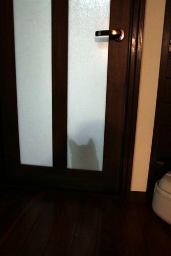 ドア越しぽんてぃー (2)