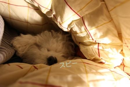 2泊3日のモフキャンレポ ~初日編~ (18)