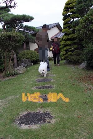 収穫祭 (11)