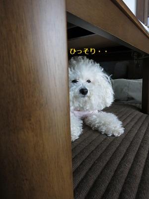 立てこもり屋 (1)