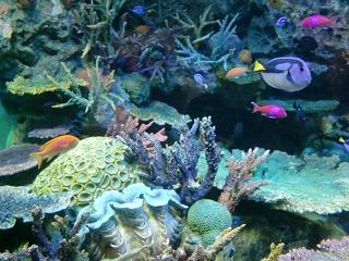 熱帯魚&さんご礁