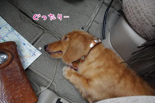 11_20110815003938.jpg