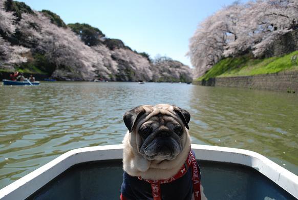 そんなわけで、ボートに乗ってます^^;