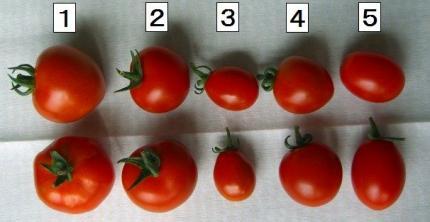 縦に2個が同じトマトです。