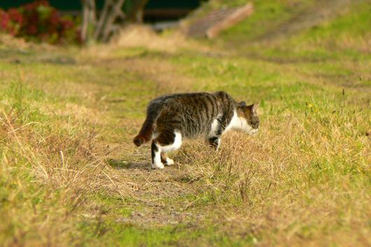 091122 ノラ猫2