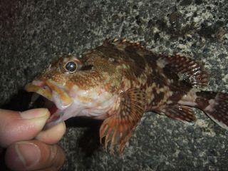 釣り収め2_320