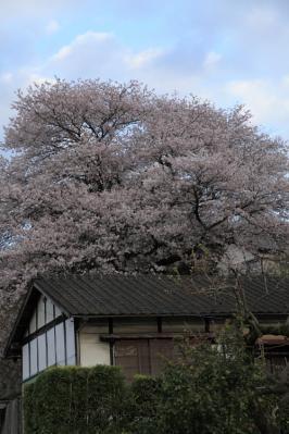 sakurayashiki13.jpg
