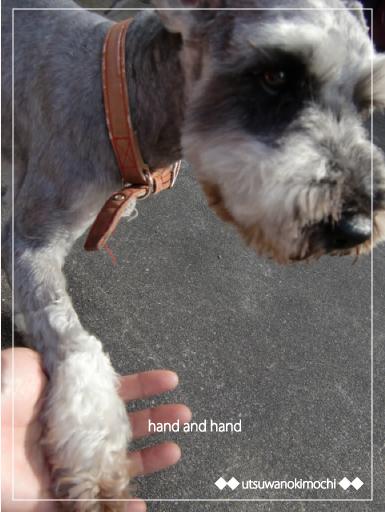 セシルと握手