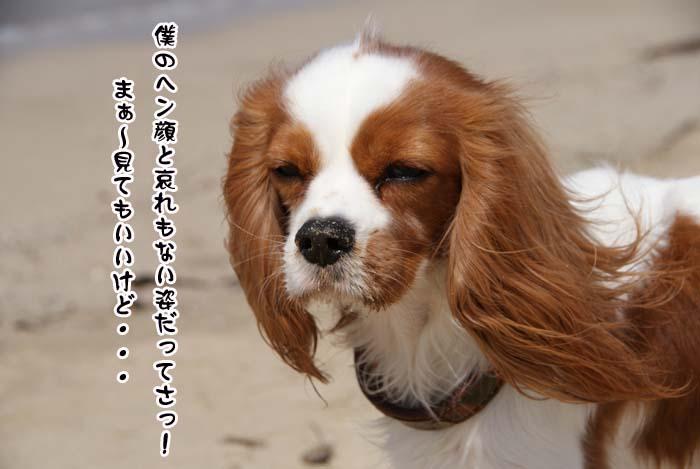 20110410_150.jpg