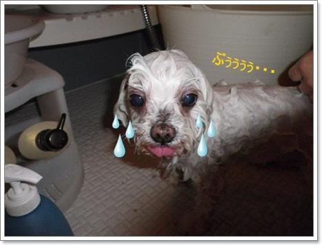 ププお風呂3
