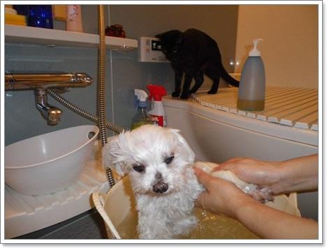 ププお風呂