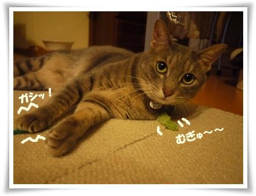 猫草大好き4