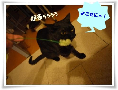 猫草大好き3