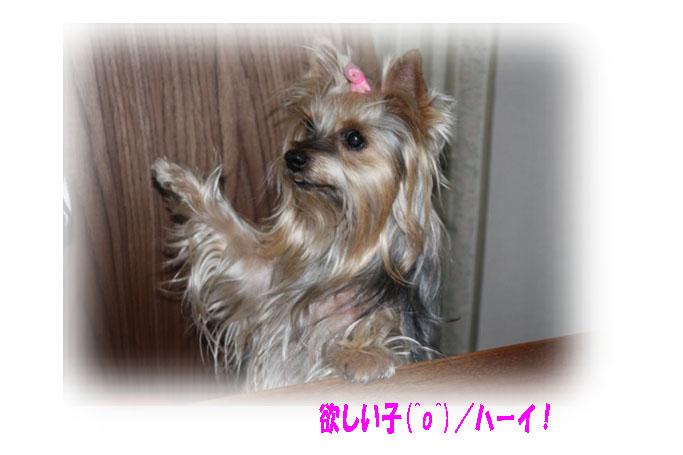 IMG_5158a.jpg