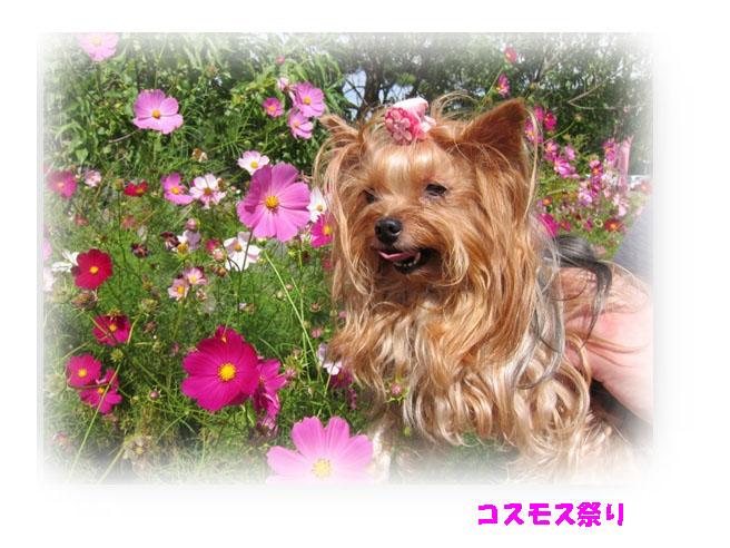 IMG_7571a.jpg