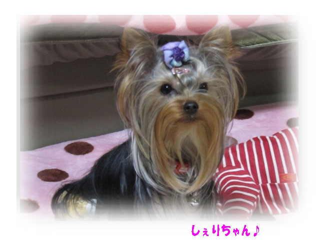 IMG_8555a.jpg