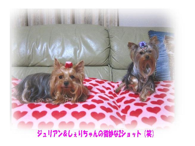IMG_8561a.jpg