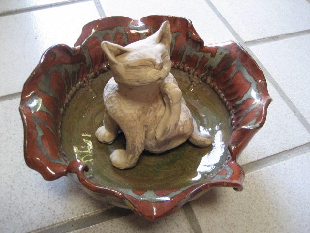 亜熱帯猫5