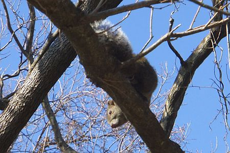 枝を登って