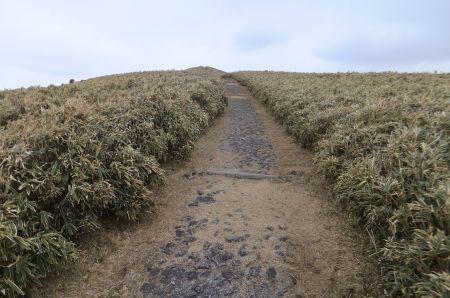 達磨山への登り