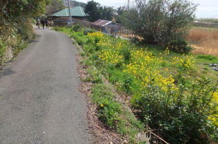 保田への道
