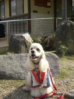 宮島2009 0991