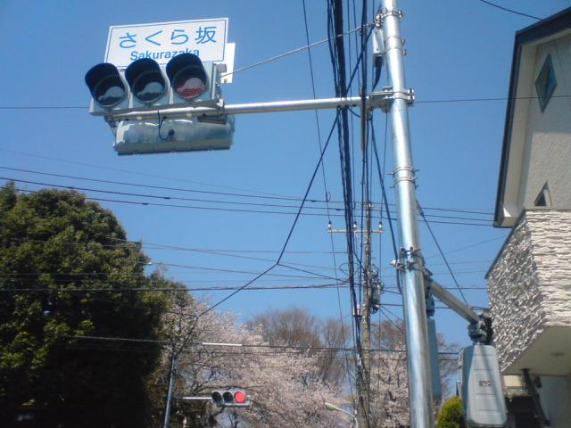 sakurazaka4