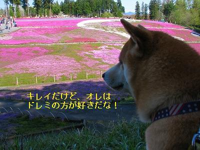 s-IMG_9167.jpg