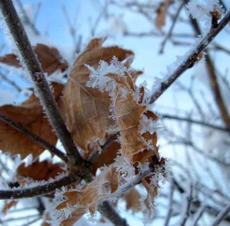 凍りついた葉っぱ2