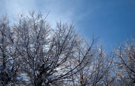 冷え冷えの木