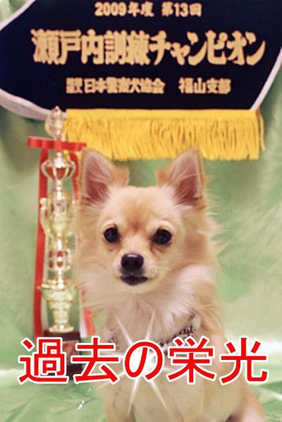 dog-06.jpg
