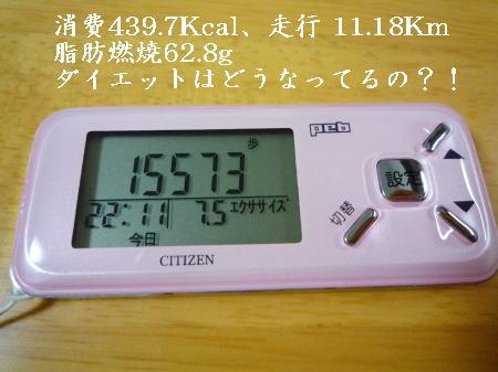 p1040898s.jpg