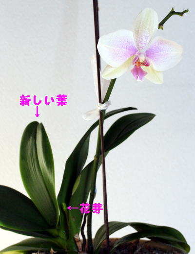 IMG_3750s.jpg