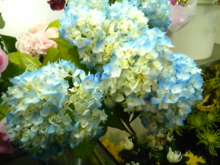 10.05.26  あじさい切り花