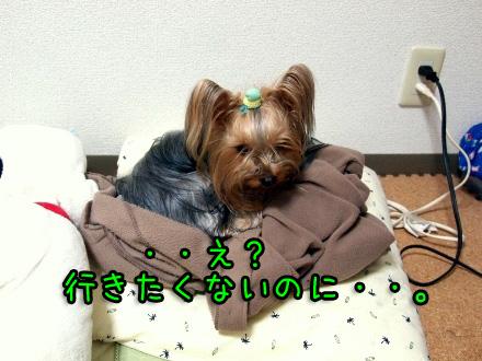 1_20091222184356.jpg