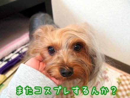 1_20091224180757.jpg