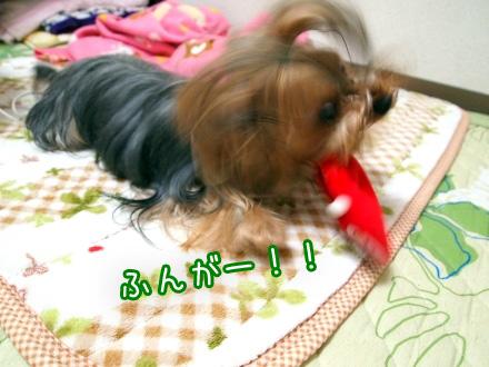 1_20091225185327.jpg